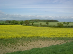 Looking towards the site of Cromwell's charge - and of the modern day lane where the 'incident' occurred!